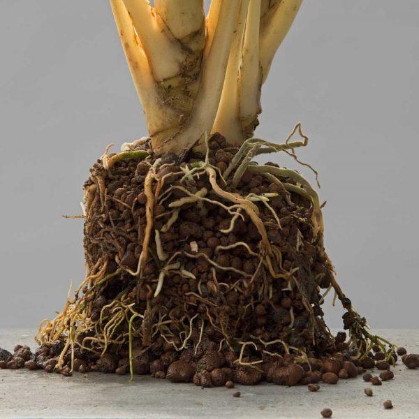 höfer-hydrokulturpflanzen